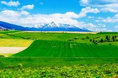 有领域的美丽的风景,绿色和黄色草甸和雪山和村庄 库存图片