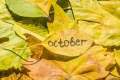 有题字的10月黄色叶子 库存图片