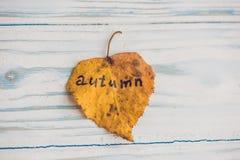 有题字秋天的黄色和绿色叶子在老木背景 免版税库存图片