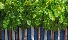 有颜色木头篱芭的绿色热带叶子庭院 免版税库存图片