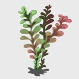 有颜色转折的热带植物 库存图片