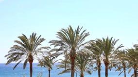 有风帆冲浪者和棕榈的蓝色海洋 股票视频