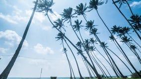 有风棕榈树斯里兰卡海岸Timelapse 4k 股票录像