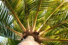 有风棕榈树 免版税库存图片