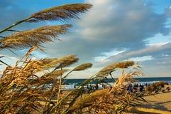 有风海滩的日落 库存照片