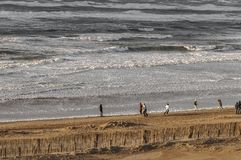 有风海滩的走的人 免版税图库摄影