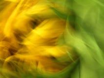 有风的向日葵 免版税库存图片