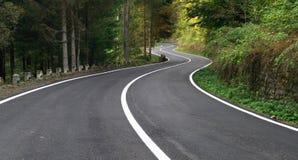 有风的森林公路 免版税库存照片