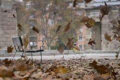 有风的秋天 库存照片