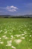 有风的草甸 图库摄影