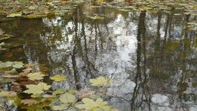 有风秋天池塘表面 股票录像