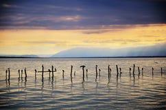 有风雨如磐的日落和鸟的瑞士湖在打桩 库存照片
