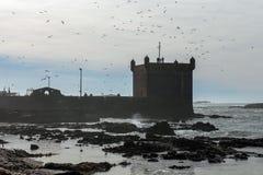 有飞行在粗砺的海岸的海鸥的堡垒 免版税库存照片
