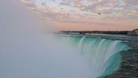 有飞过的鸟的尼亚加拉大瀑布 股票视频