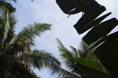 有香蕉和椰子棕榈叶的热带庭院 异乎寻常的海岛逃命照片 库存图片