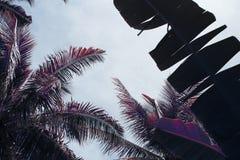 有香蕉和椰子棕榈叶的热带庭院 葡萄酒定了调子照片 库存图片