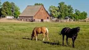 有马和谷仓的爱达荷农场 库存图片