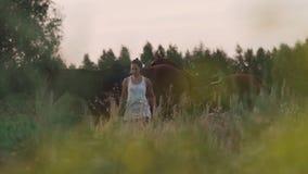 有马的两个女孩在领域 股票视频