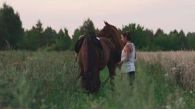 有马的两个女孩在领域 股票录像