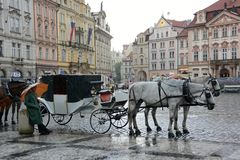 有马的支架在老镇中心在布拉格 库存图片