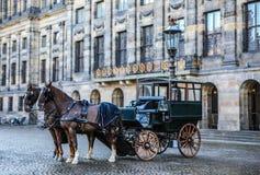 有马的支架在阿姆斯特丹中心广场  免版税库存照片
