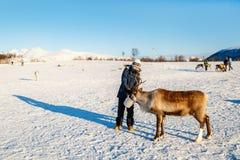 有驯鹿的十几岁的男孩 库存图片