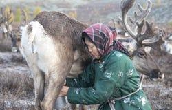 有驯鹿的Tsaatan妇女在北蒙古风景 库存照片