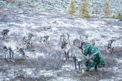 有驯鹿的Tsaatan妇女在北蒙古风景 免版税库存图片
