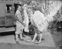 有驼鸟服装的人(所有人被描述不更长生存,并且庄园不存在 供应商保单将有 免版税库存图片