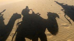 有骆驼影子的沙漠 库存照片
