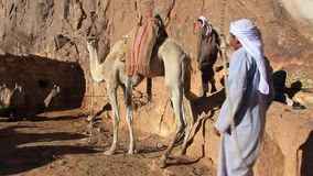 有骆驼的流浪者在摩西山。西奈半岛,埃及 影视素材
