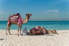 有骆驼的流浪者在海滩 免版税库存照片