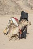有骆驼的老流浪的妇女在沙漠 库存照片