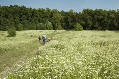 有骑自行车的孩子的家庭在白花的领域在春天,夏天 在户外自行车的步行 免版税库存图片