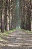 有高大的树木和道路的一个美丽的公园 免版税库存图片