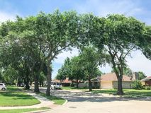 有高大的树木机盖、路和单身家庭的房子的相当邻里排队了 库存照片