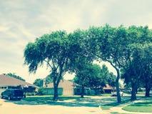 有高大的树木机盖、路和单身家庭的房子的相当邻里排队了 免版税库存图片
