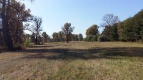 有高大的树木的草甸 库存照片