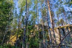 有高峭壁的森林 库存图片