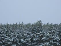 有高度的冬天森林 免版税库存照片