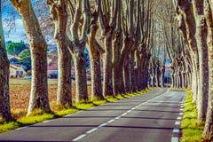 有高树的农村路在双方 图库摄影