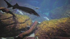 有鱼和鲨鱼的水族馆 影视素材