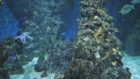 有鱼和鲨鱼的水族馆 股票视频