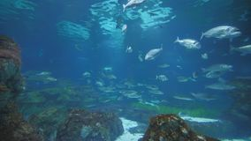 有鱼和鲨鱼的水族馆 股票录像