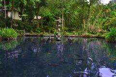 有鱼的小池塘在巴厘语寺庙 库存照片