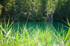 有鲜绿色水和瀑布的湖 免版税图库摄影