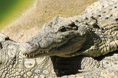 有鳄鱼的一个大公园,托雷莫利诺斯角,马拉加,西班牙 库存照片