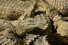 有鳄鱼的一个大公园,托雷莫利诺斯角,马拉加,西班牙 免版税库存照片
