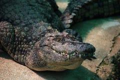 有鳄鱼的一个大公园,托雷莫利诺斯角,马拉加,西班牙 图库摄影