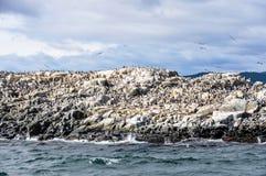 有鸟的海岛,小猎犬海峡,乌斯怀亚,阿根廷 库存照片